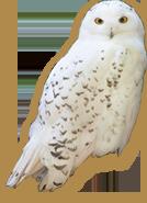 owl-img